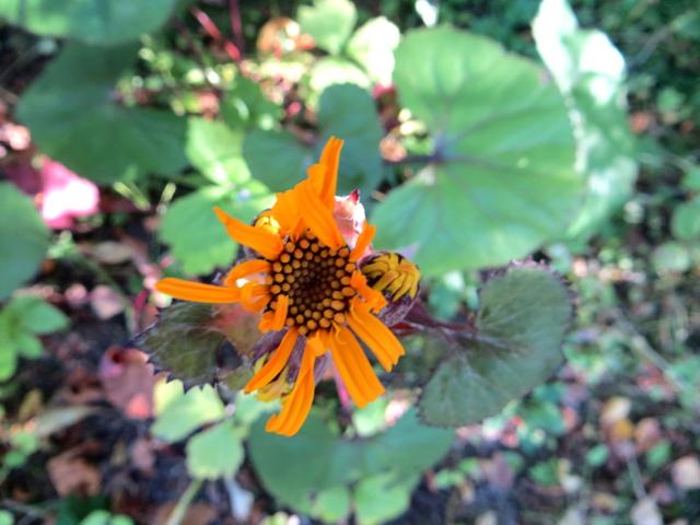 garden flower orange