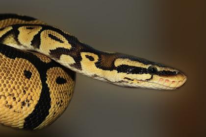 Mungkin sobat ingin tahu: Apakah Google  menggunakan bahasa pemrograman Python?