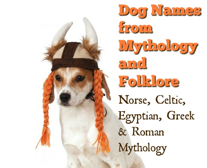 70 Cool Names for Dogs From Mythology and Folklore | The Modern Bark