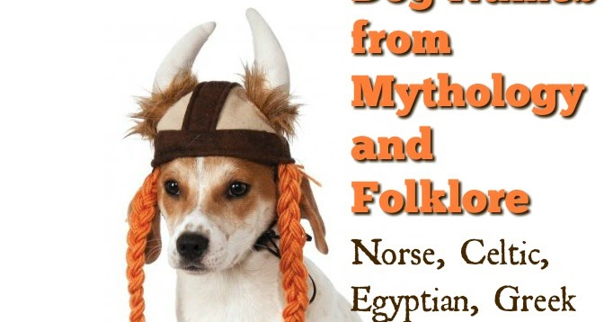The Modern Bark | Dog Training Tips: 70 Cool Names for Dogs