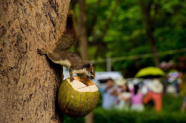 efek samping minum air kelapa secara berlebihan.