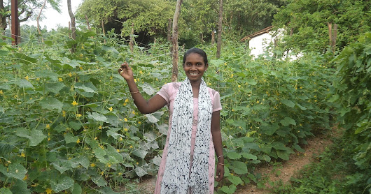 One womans calculated risk on new vegetable farming benefits community