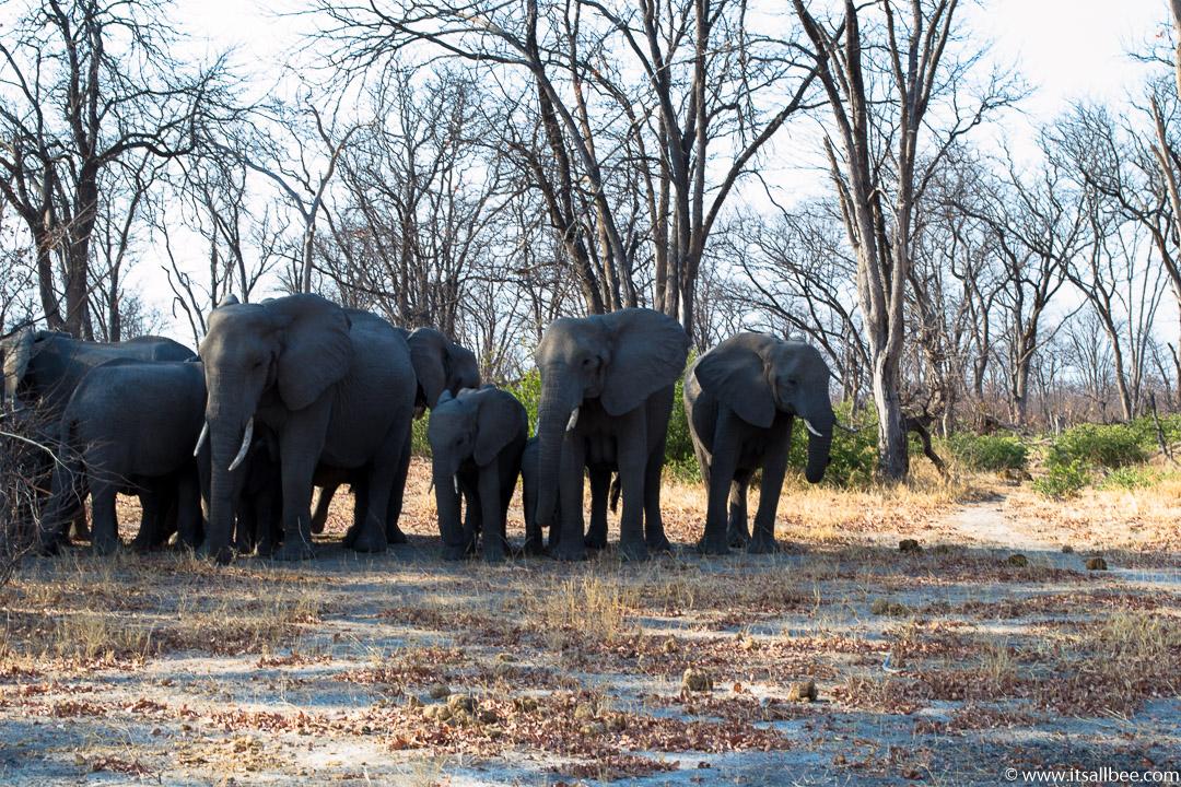 Visions of Wild In Africa's Botswana | Okavango Delta Safari | okavango elephants