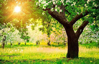 Daun, Dahan, dan Pokok Iman