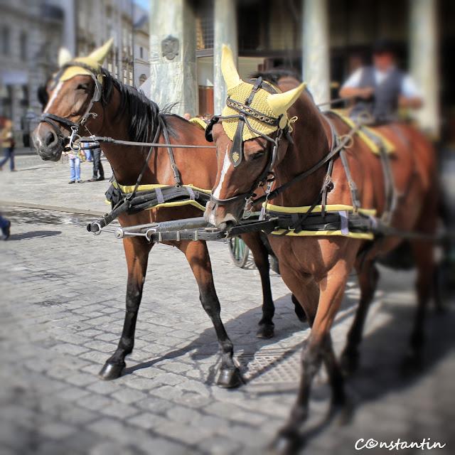 Trăsura cu cai - Viena