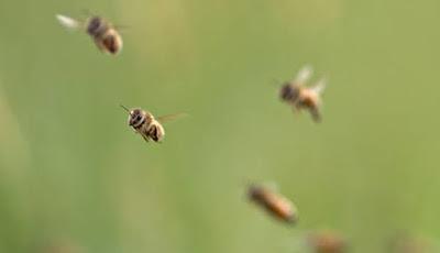 Gawat, Populasi Serangga Mengalami Penurunan Besar-Besaran