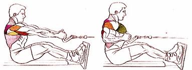 Remo polea al pecho ejercicio hombre rutina