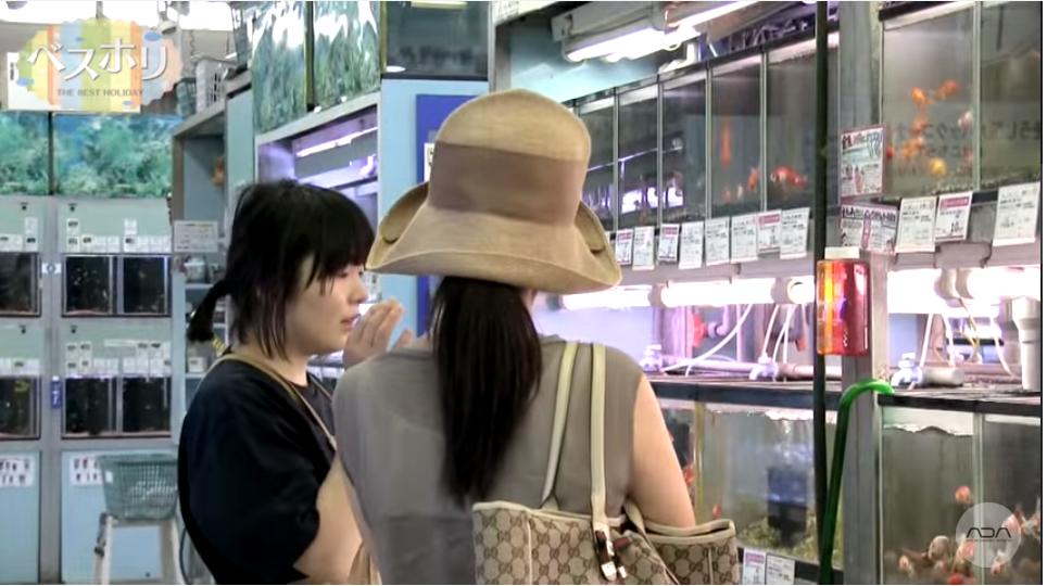 Một cửa hàng thủy sinh chuyên nghiệp ở Nhật Bản