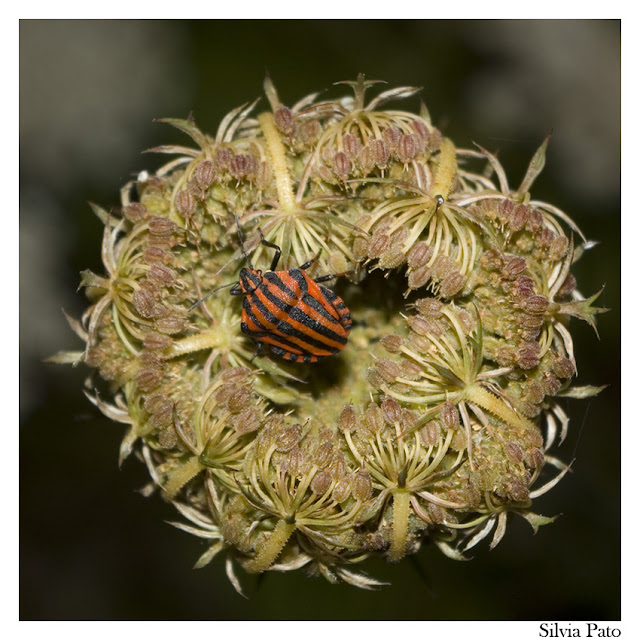 Flor e insecto