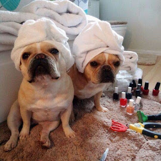 Funny Dog Picture Depicting Skincare