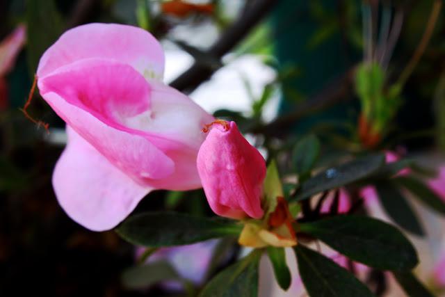 Dos capullos florales