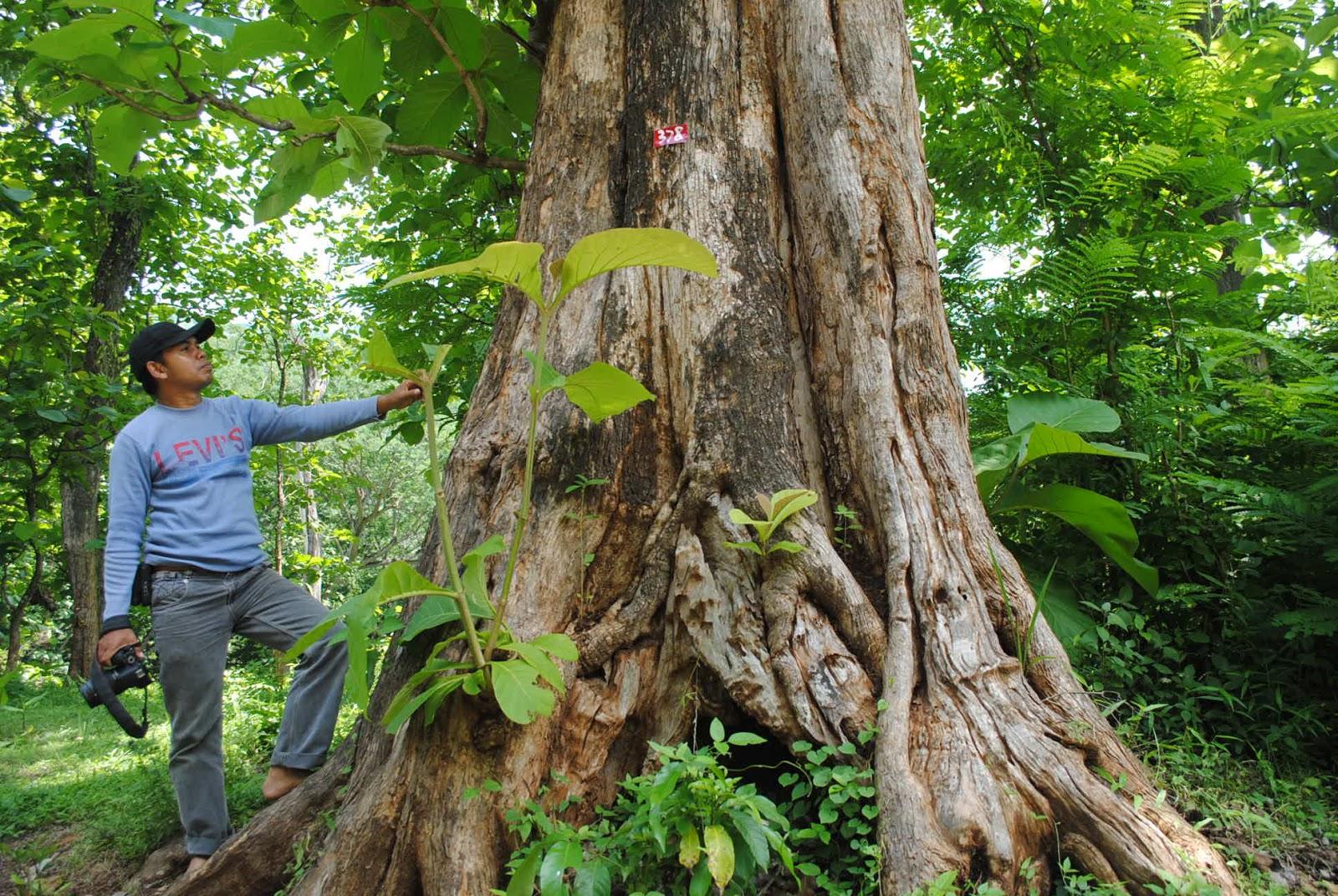 Buku Pintar Kabupaten Wonogiri Kisah Mistis Hutan Jati Donoloyo