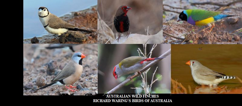Richard Waring's Birds of Australia