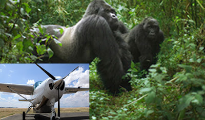 flying gorilla trekking uganda, flights to bwindi gorilla trek, flying gorilla tracking tour price, flight entebbe to bwindi gorilla trek, flying gorilla safari, uganda flying gorilla tracking safari, uganda gorilla trek, bwindi accommodation, bwindi transport, bwindi hotels, bwindi lodges, gorilla tracking bwindi, luxury gorilla tour, luxury accommodation bwindi, private tour uganda