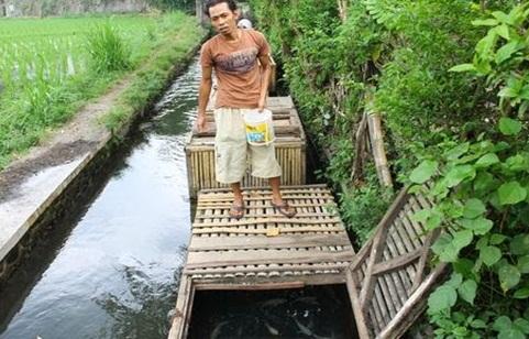 10 Contoh Usaha Kecil yang Cocok di Desa dengan Modal Sedikit dan Menguntungkan