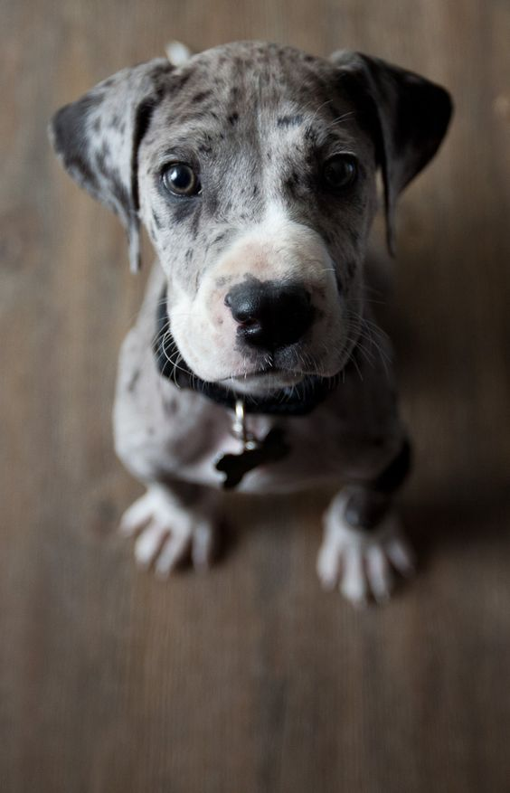 Top 10 Dog Breeds That Bark The Least