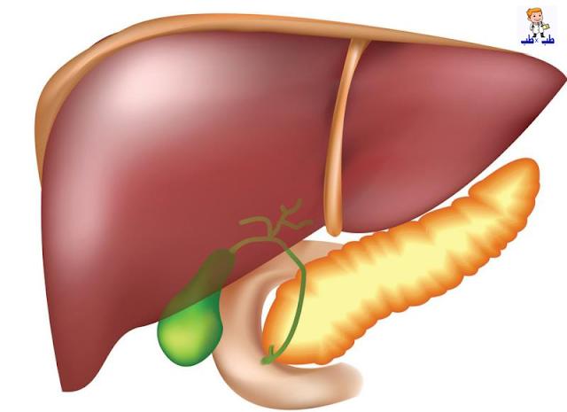 صحة الكبد,تنظيف الكبد,الجهاز الهضمى,العصارة الصفراوية,الصفراء,وقاية الكبد