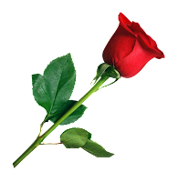 rose png for valentinr day 2019 photo editing