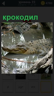 В грязном водоеме лежит довольный крокодил и ждет свою добычу