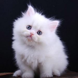 Kucing Comel Dan Gebu Kucingcomel Com