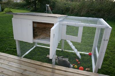 contoh kandang kelinci outdoor