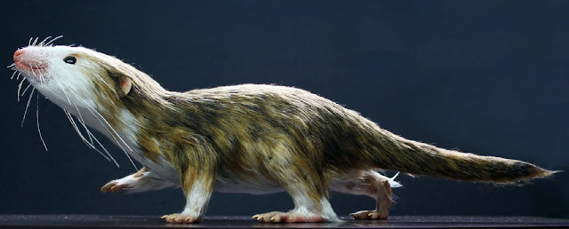 Tiny fossils reveal how shrinking was essential for successful evolution