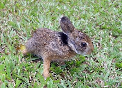 baby-rabbit.jpeg