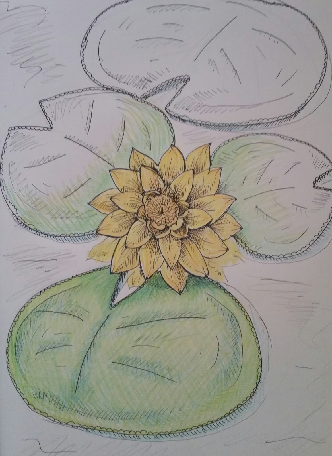Sketch of the week lily pad flower izmirmasajfo