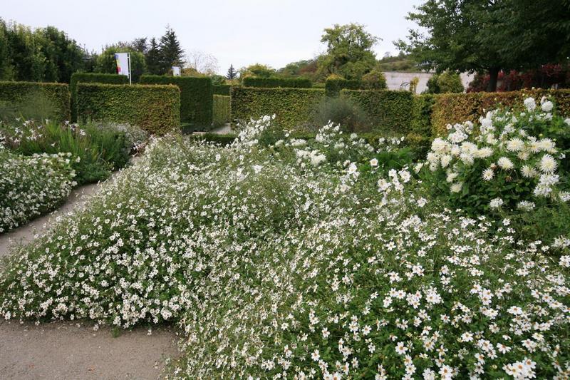 Flores de Anemone nemerosa en Jardin Claude Monet en Giverny en otoño