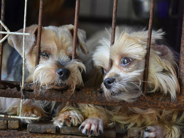 puppy mill And Unethical Adoption Practices