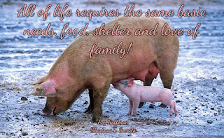 All lives serve a higher purpose All of life requires the same basic needs, food, shelter and love of family!