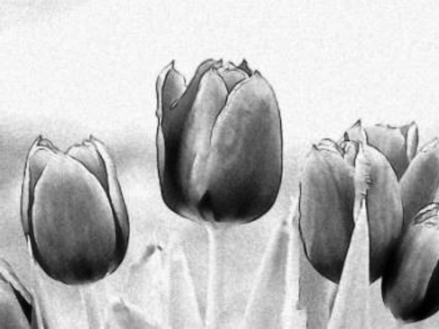 Pictures Of Flowers Drawn