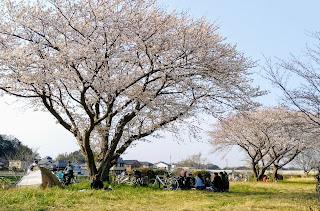桜 千葉市 / 花見川