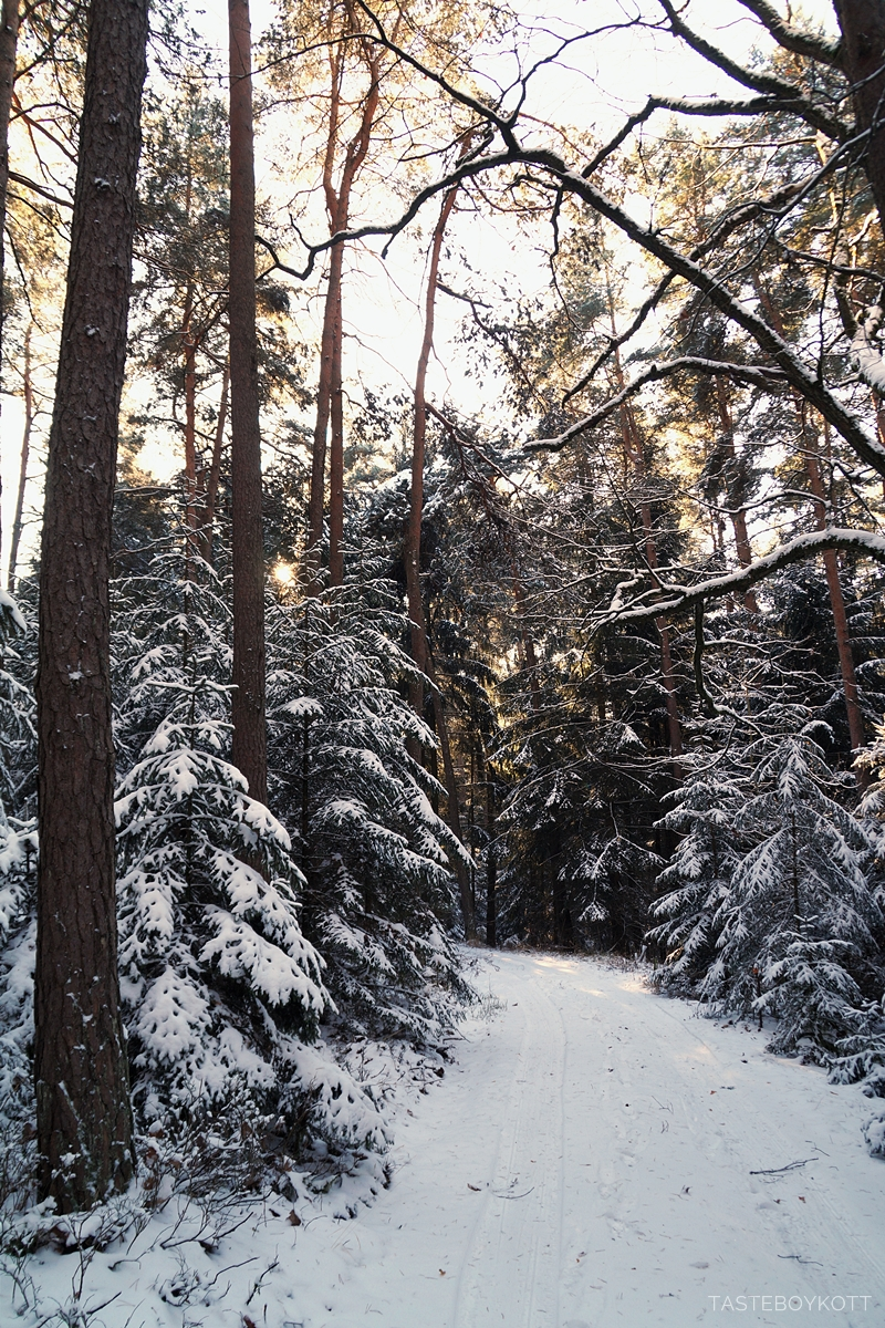 Sunny snowy winter day in the forest - magical!