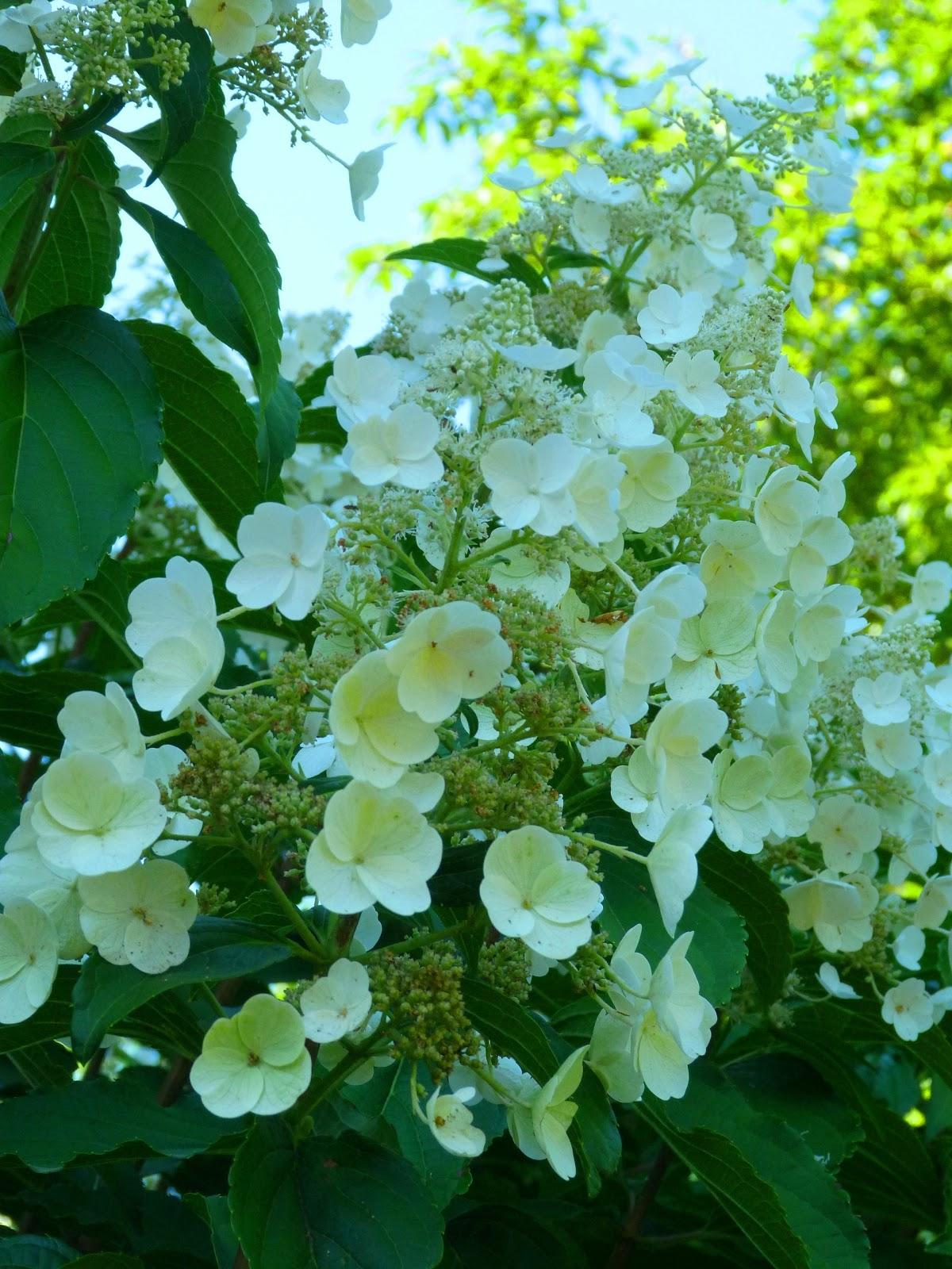 My Garden HavenA Fine Romance