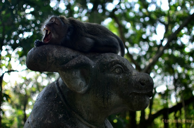 Mono bostezando Monkey Forest Ubud