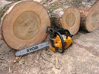 直径50㎝の楠の木