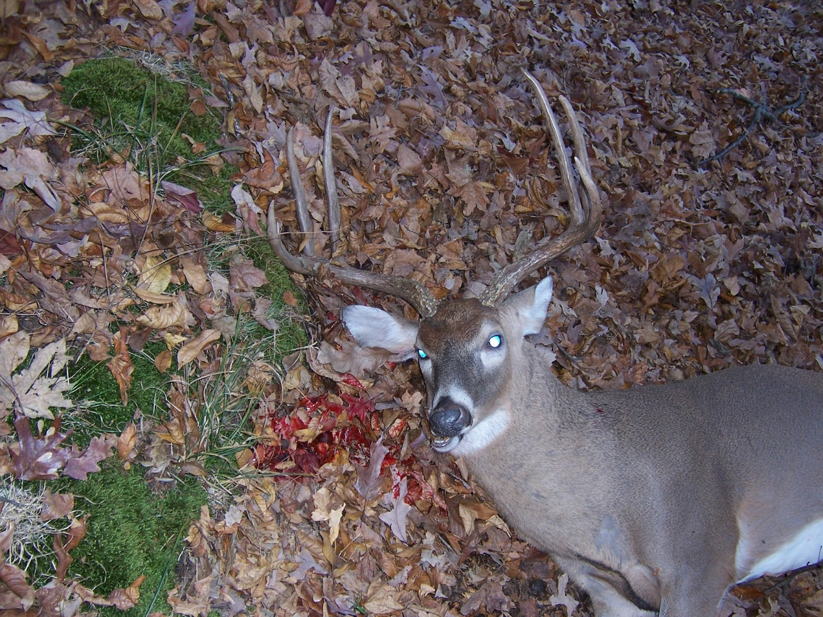 Rare Breed Whitetail Hunting Deer Pictures
