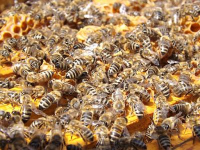 pixabay.com/en/bees-beehive-beekeeping-honey-busy
