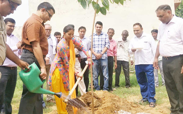 Tree is the basis of our lives, planted by every person - Maniram Sharma, DC, Palwal