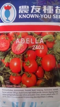 Known You Seed, Benih,hibrida, tomat, tahan virus,kuning, keriting, unggul, dataran rendah, tinggi, petani,Adella, Adella murah, Bibit , Benih Tomat Adella