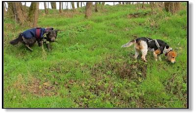 Emma und Lotte auf der Suche nach dem Frühling