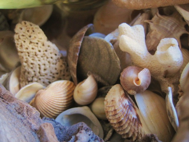 Seasonal Decorating Ideas using Nature. Shells