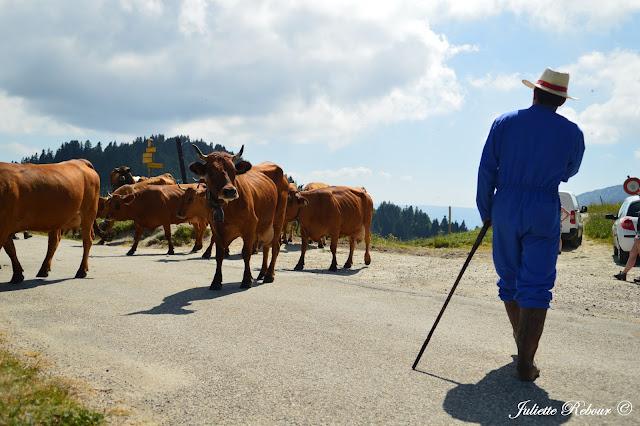 Alpage du Charmant Som et vaches