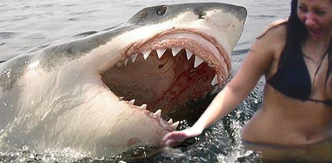 Τα «Σαγόνια του Καρχαρία» κρύβουν την απάντηση για έναν ανεξιχνίαστο φόνο 44 χρόνια πριν