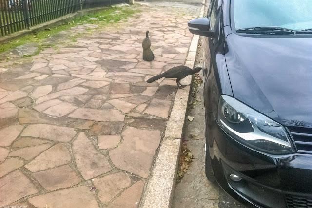 Jacus passeando na rua, um deles invocando com a própria imagem refletida em um carro