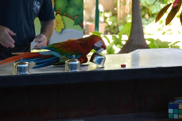 smart parrot תוכי חכם חמת גדר