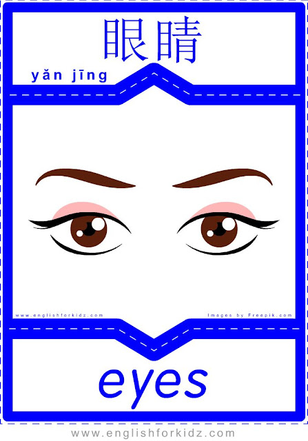 Eyes English-Chinese flashcard for the body parts topic, printable ESL flashcards