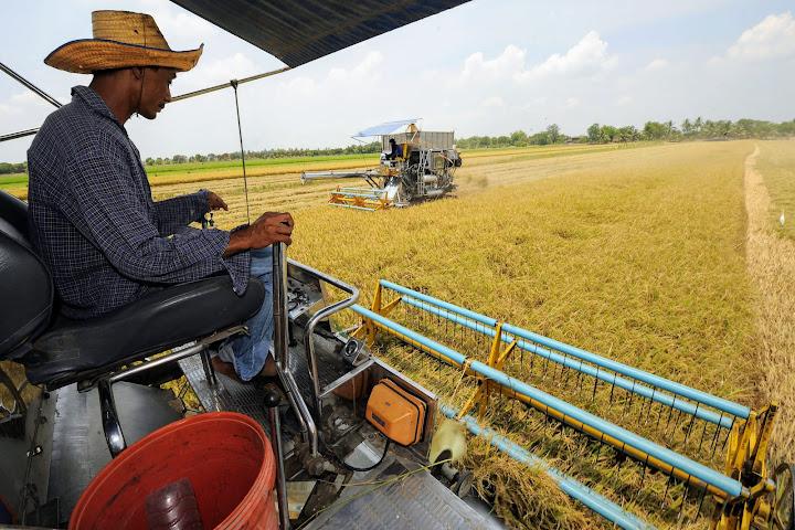Засуха и сильный бат делают тайский рис, сахар и каучук неконкурентоспособными — Thai Notes