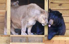 animales jugando